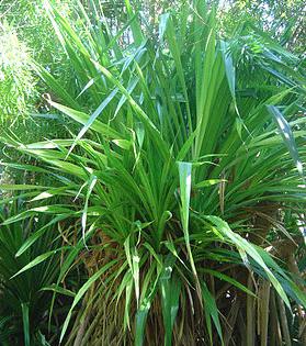 Visite guidée du jardin d'Eden à la Réunion